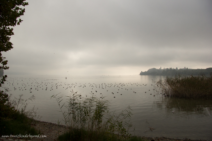 Birds resting on a foggy Lake Constance | Germany
