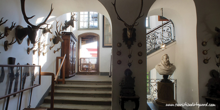 Antique Hunting trophies in Meersburg Castle