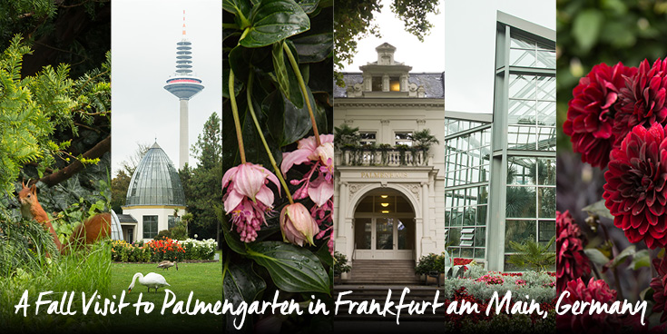 Enjoying the dahlias in bloom, cooler weather, and an expansive greenhouse complex while exploring the historic Palmengarten in Frankfurt am Main.