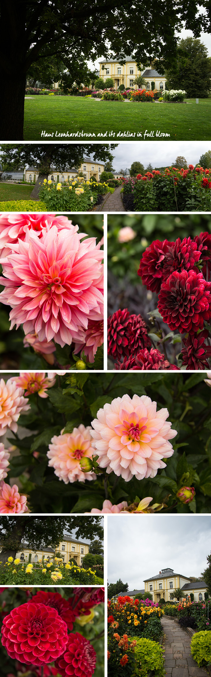 In September, the dahlias are in full bloom in front the Haus Leonhardsbrunn in Palmengarten in Frankfurt am Main, Germany