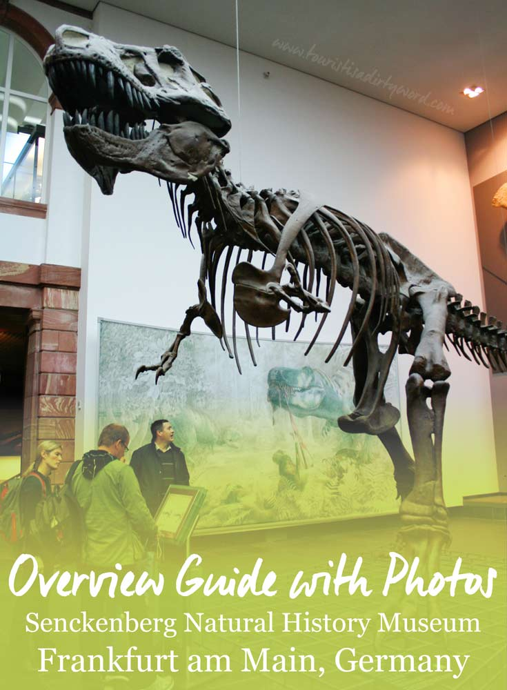 Senckenberg Natural History Museum: Overview Guide with Photos • Germany Travel