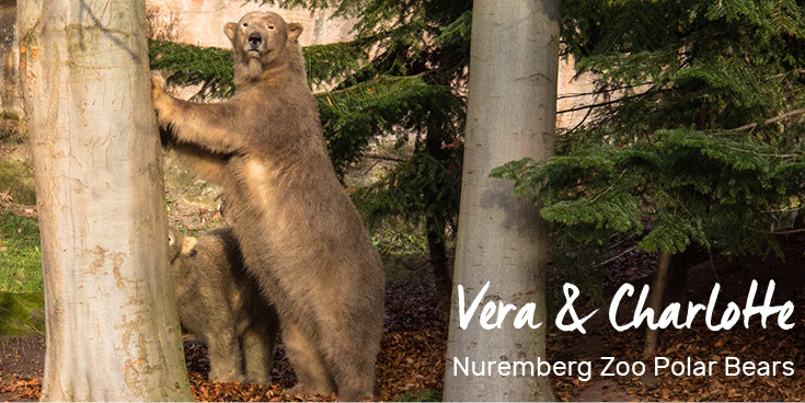 Mother Vera and daughter Charlotte, polar bears in the Nuremberg Zoo, Germany