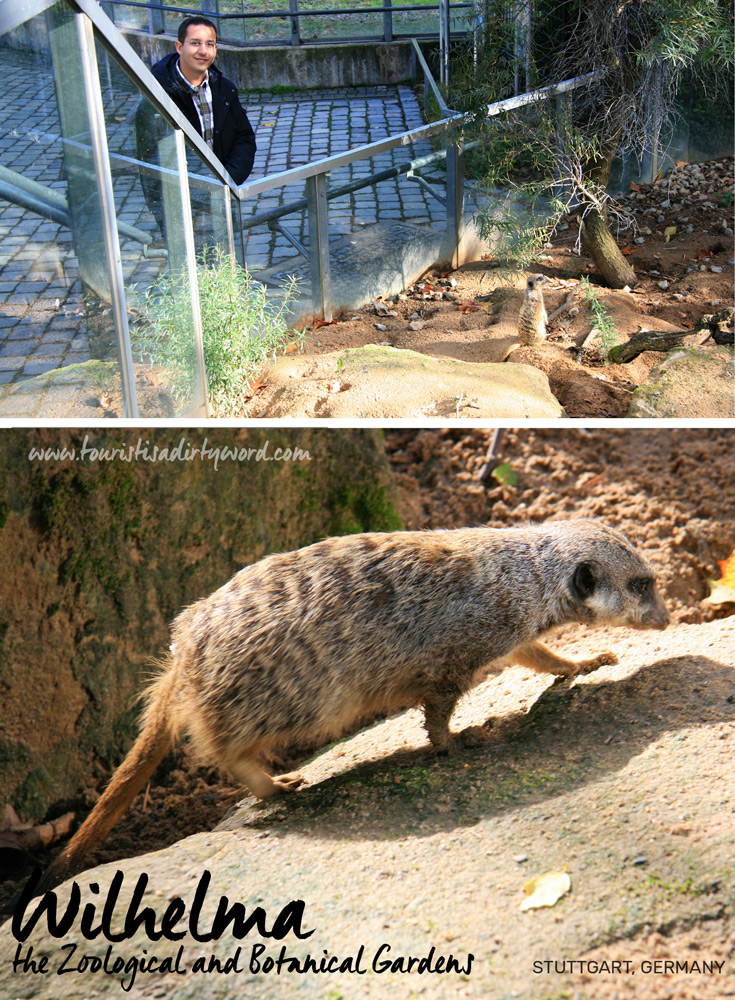 Wilhelma the Zoological and Botanical Gardens | Meerkat Exhibit